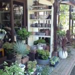 かもがわ円城のカフェ「花空間 ivory (アイボリー)」