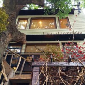 おとぎ話に出てきそうな広尾のツリーハウスカフェ「レ・グラン・ザルブル」