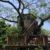 akatuki_treehouse